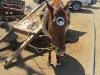 APE on Horse
