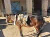 APE on Horseback