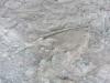 Metoposaurus Mass Grave