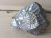 Ammonite Fragment