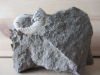 Ammonite Fragment & Brachiopodes
